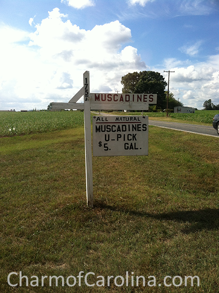 Muscadines sign