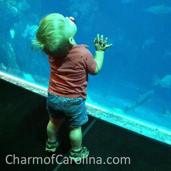 luke at aquarium